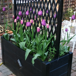 One of two wooden planters made from decking planks and four corner posts with a cheap trellis top