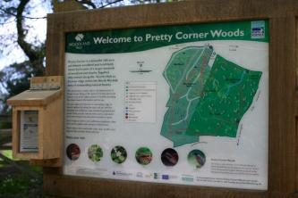 Pretty Corner Wood