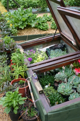 Cold Frame - full!
