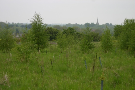 Lukeswood- recent tree planting