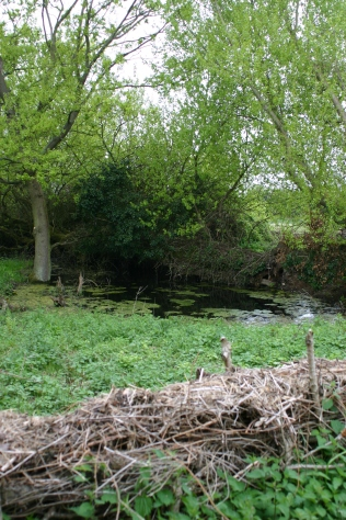 The pond with recent 'stockading' to protect this and create habitats