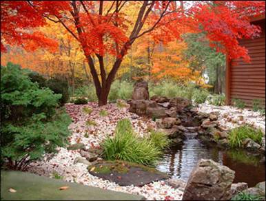 Maples (Acers) Provide Glorious Autumn Colour In This Japanese Style Garden