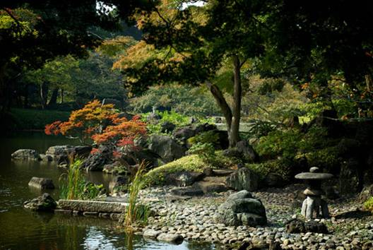 Water landscape with typical japanese planting