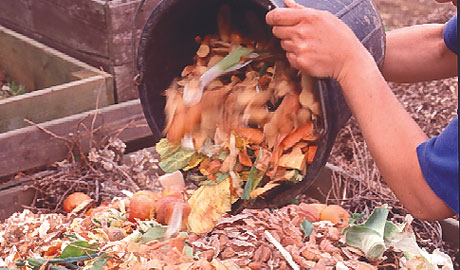 kitchen waste into the compost bin