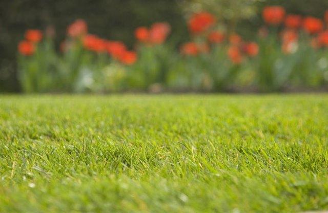 lawn - credit RHS
