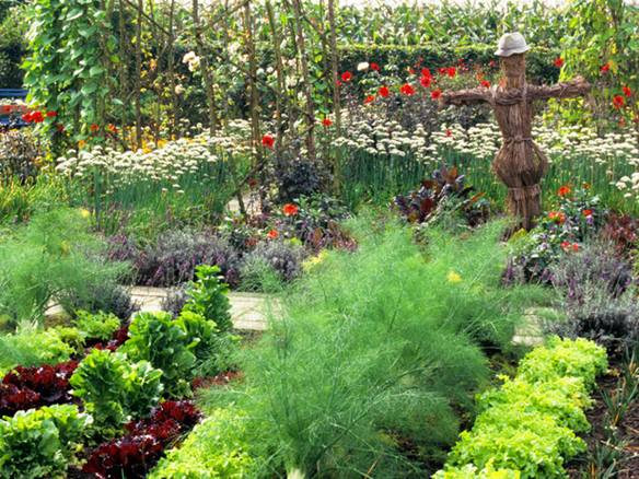 Productive gardens can also look good, if vegetables with different leaf shape and/or colour and companion plants are interplantedProductive gardens can also look good, if vegetables with different leaf shape and/or colour and companion plants are interplanted