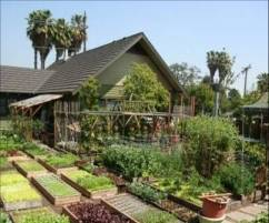 Orderly food growing areas can be attractive in their own right