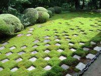 A modern Moss garden in Kyoto
