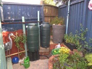 Harvesting rainwater can help conserve water supplies- here three water butts are linked together so that overflow from one is saved to the others
