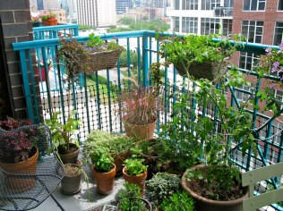 A balcony with a selection of pots for growing herbs and food can look attractive