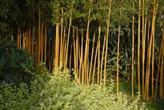 Ccontrasting colour and texture from bamboo canes atThe Exotic Garden, Norwich