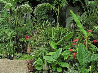 Shades of green and varied leaf shape and texture with splashes of colour at The Exotic Garden, Norwich