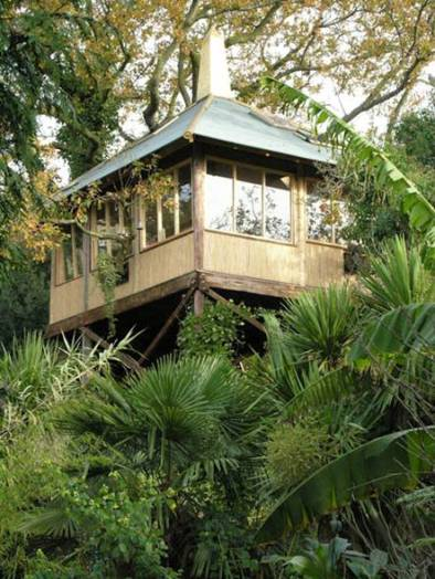 Tree house - The Exotic Garden, Norwich