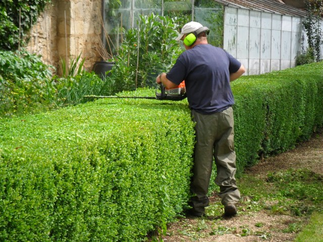 Lowish hedges can eb trimmed by eye as long as a good original line has been established