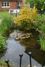 Gressenhall Farm & Workhouse Museum- The Wildife Pond