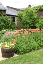 Oriental Poppies in the Education Garden