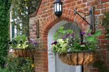 Hanging baskets getting established