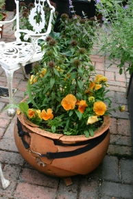 My cracked terracotta pot held together by a belt- still attractive for now!