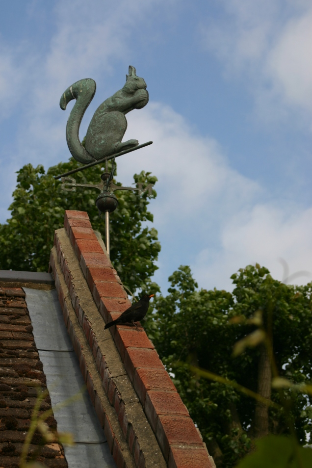 'Suzy Squirrel' (weathervane) and that pesky blackbird!