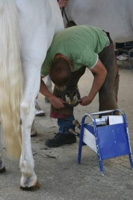 Horse shoeing display