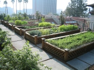 Formal raised beds on the roof