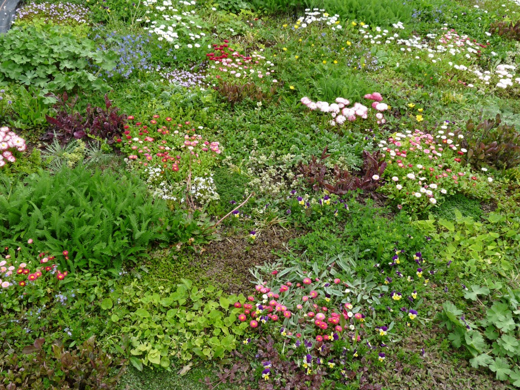 A Grass  Free U0027Floral Lawnu0027 Has Been Opened Today In Avondale Park, West  London. Itu0027s Plants, Which Include Daisies, Red Flowering Clover, Thyme,  Chamomile, ...