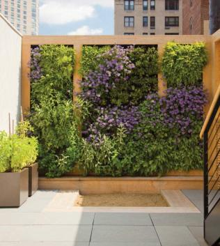 A colourful vertical garden