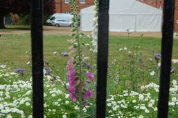 Gressenhall Farm & Workhouse museum- wild flower border and the marquee beyond