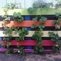 PicPost: Pallet to Strawberry planter