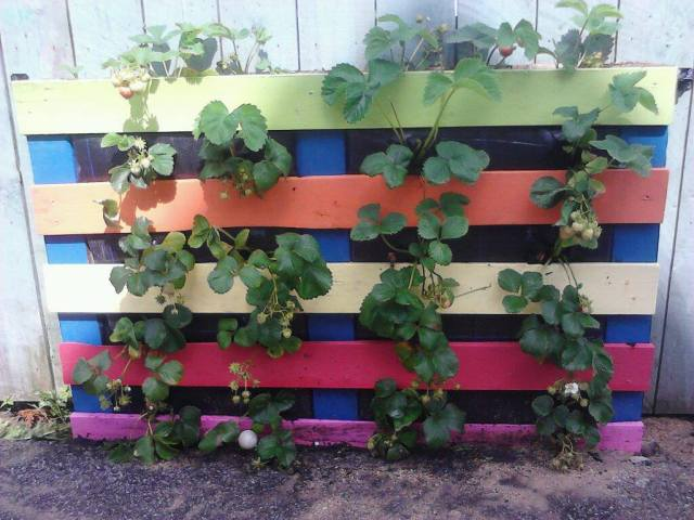 PicPost:Pallet to Strawberry planter