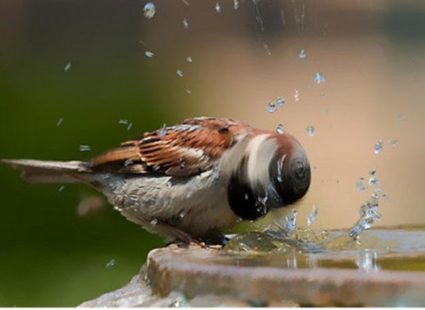 Keep the bird bath topped up in hot weather