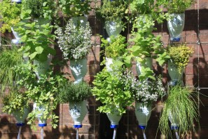 And more plastic bottles put to good use as planters