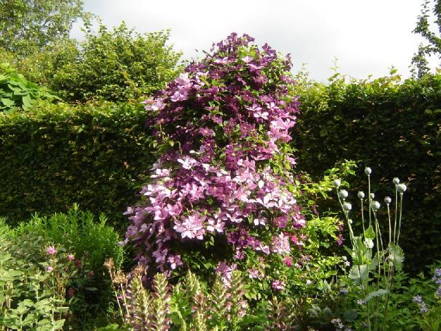 Add height to your borders with a simple post, plus mesh for Clematis to clamber up