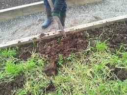 Digging in Grazing Rye