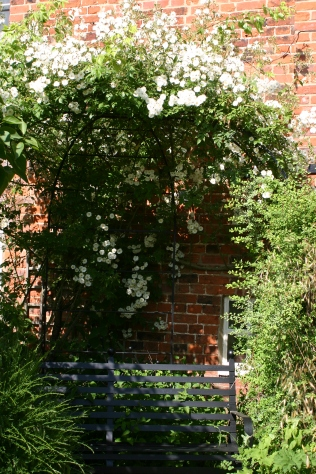 'Rambling Rector' rose scrambling over the arbour in the Wildlife Garden