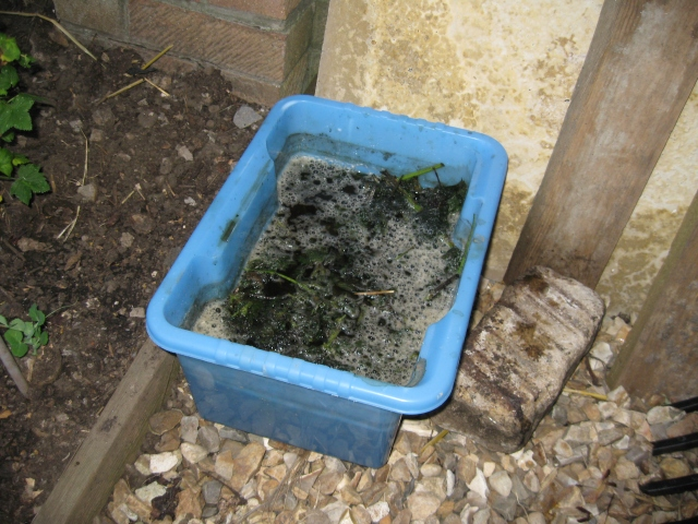 Making Nettle Plant Food- image from Tracey the transitoner