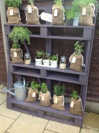 A stylish herb shelf from painted pallets- could be good as a plant 'theatre' for displying prize specimens