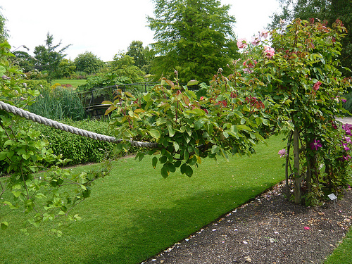 A rose trained along a rope 'swag' between posts provides a permeable divider in the garden