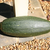 The courgette that got away..