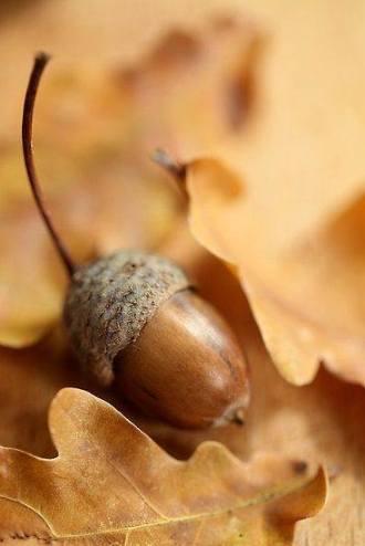 acorn 3