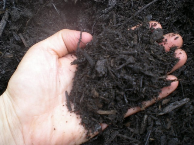 Adding compost or other organic material to the soil by digging in or as a mulch is a must...