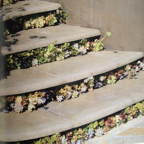 succulent steps