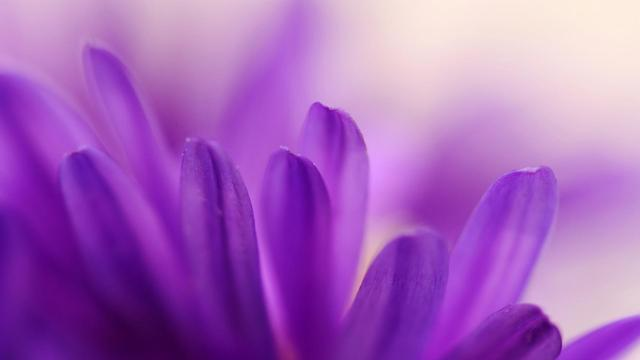 flower-petals-aster-nature-free-hd