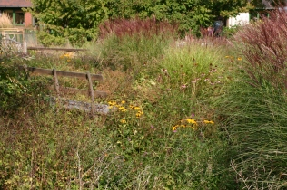NMaturalistic planting area