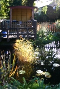 Sunlit grasses in the wildlife pond