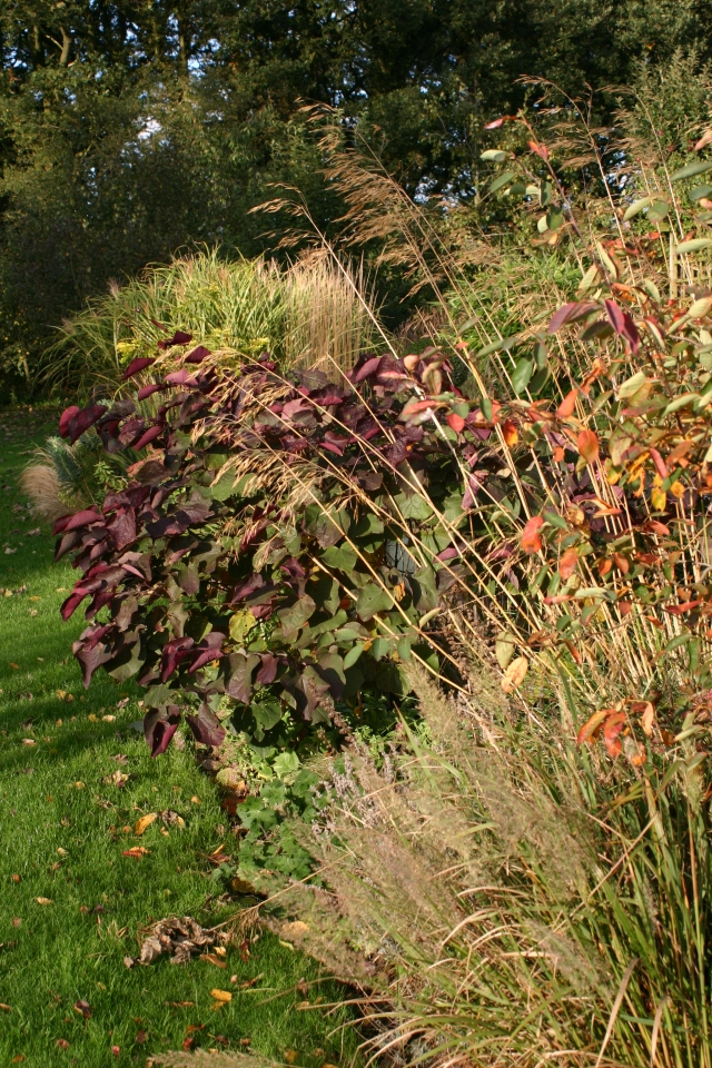 Grasses and autumn leaves are looking good in Old School Garden