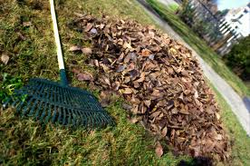 Keep leaf raking and saving to make leaf mould