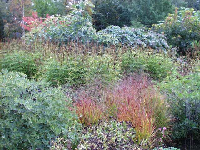Part of the Piet Oudolph beds at RHS Wisley Gardens
