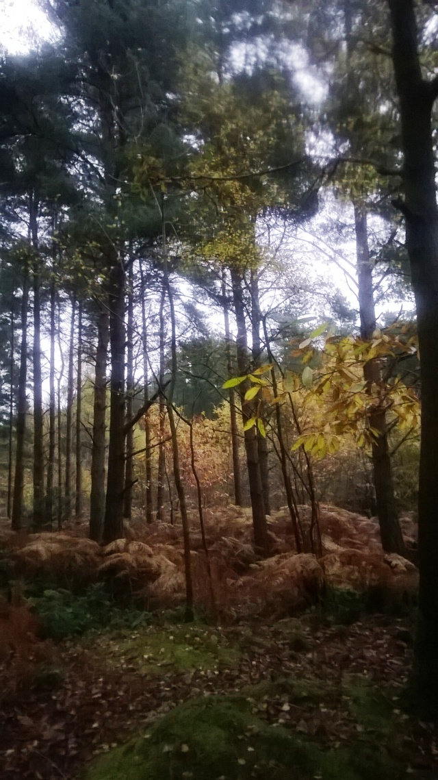 This Country Park had some beautiful autumn leaf colours