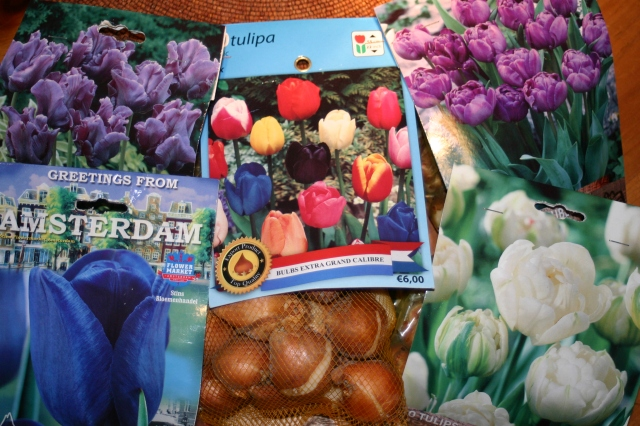 Tulips from Amsterdam...